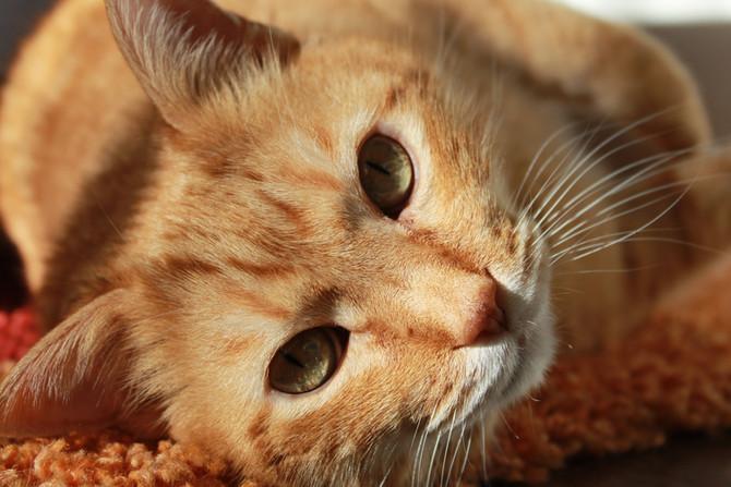 Είναι γάτα...κι όμως με αγαπά