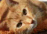 cat pastel portraits