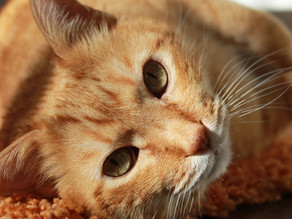 When Cancer Strikes Our Pets