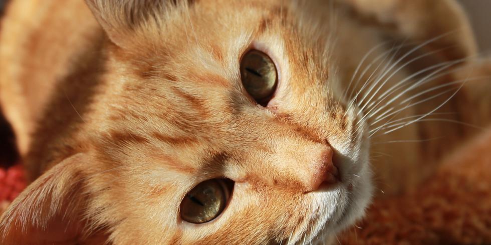UC Davis Optimizing Care of the Senior Cat