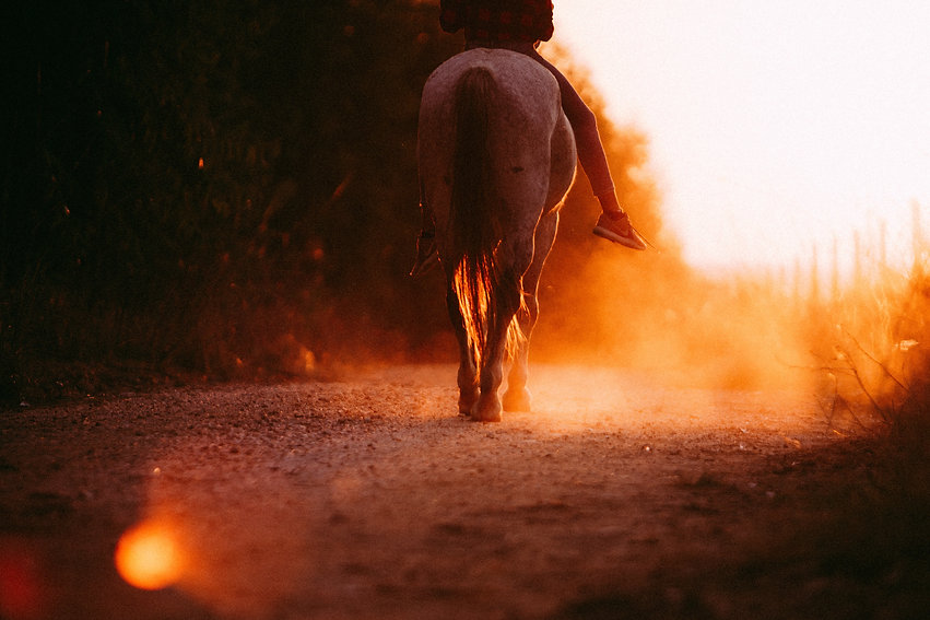 person-riding-horses-during-sunset-38593