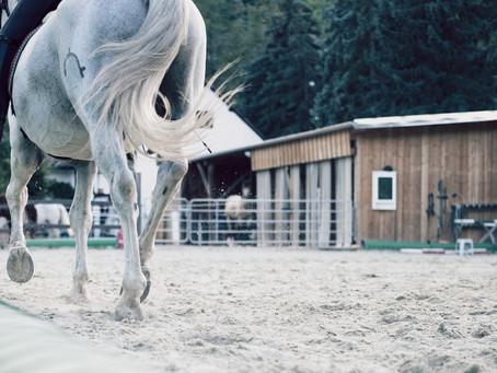 Wie wichtig sind die Basics? Und warum können das viele Pferde nicht?