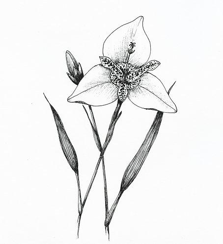 """""""Tiger Flower"""" digital png illustration"""