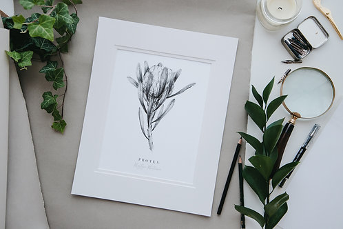 Protea Fine Art Giclee Print