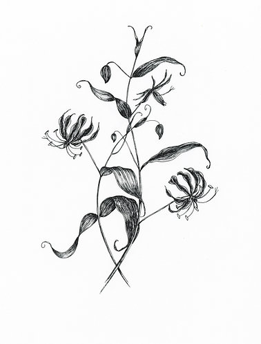 """""""Flame Lily"""" Hand drawn digital png illustration"""