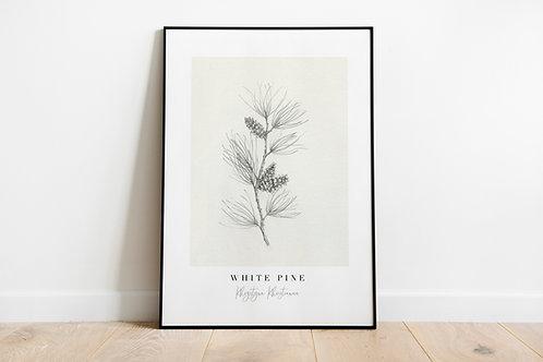 White Pine Fine Art Giclee Print