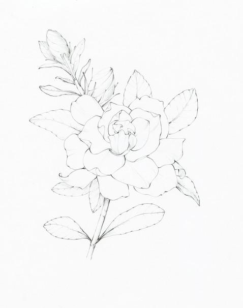 """Gardenia"""