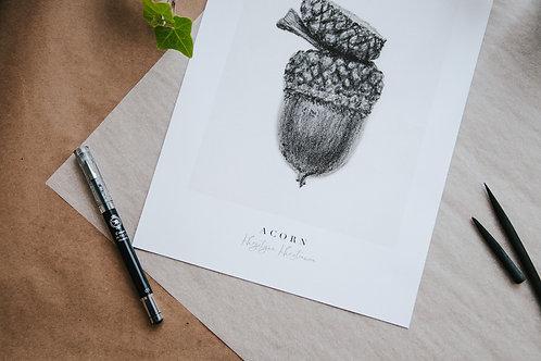 Acorn Fine Art Giclee Print