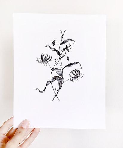 Original Floral Ink Illustration. Flame Lily. Black Ink Botanical Illustration.