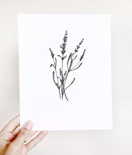 Original Floral Ink Illustration. Lavender. Black Ink Botanical Illustration. 8x