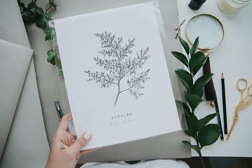 Astilbe Fine Art Giclee Print