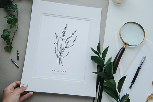Lavender Fine Art Giclee Print