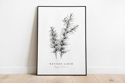 Western Larch Pine Fine Art Giclee Print