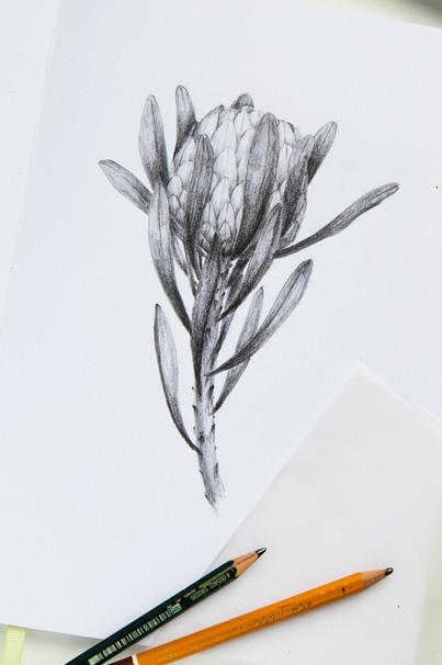 """""""Protea"""""""