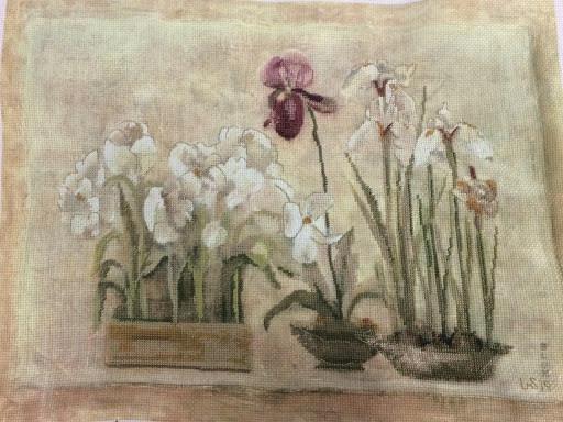 """Irises"" Linda Steffancin"