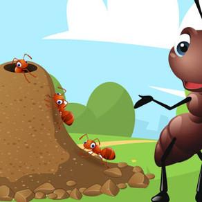 Vídeo explicativo hormigas 5.o.