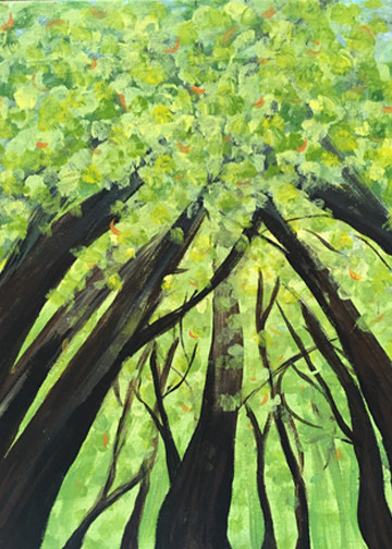 Forrest Canopy