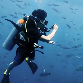 Monkey dive thailand 17.jpg