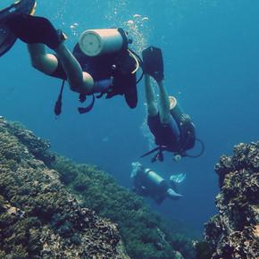 Monkey dive thailand 20.jpg
