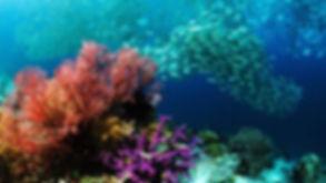 Phuket-dive-trips-Diving-Phi-Phi-Islands