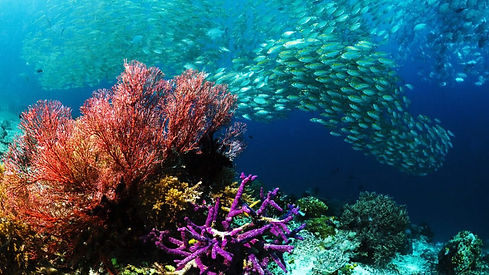 Phuket-dive-trips-Diving-Phi-Phi-Islands