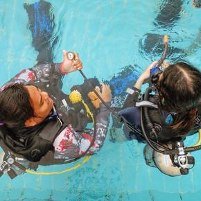 Monkey dive thailand 7.jpg