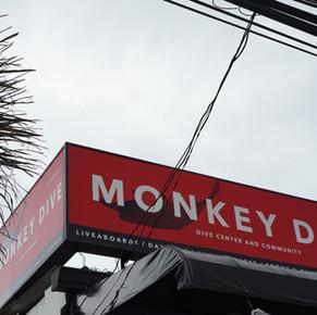 monkey dive thailand