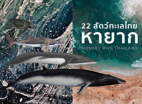 22 สัตว์ทะเลในไทยหายากที่นักดำน้ำอยากเจอสักครั้งในชีวิต