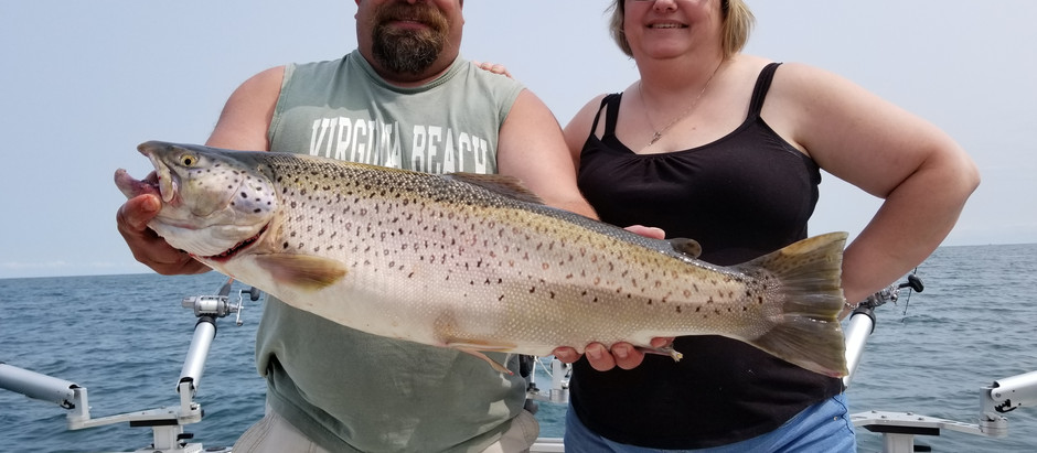 Brown Trout fishing