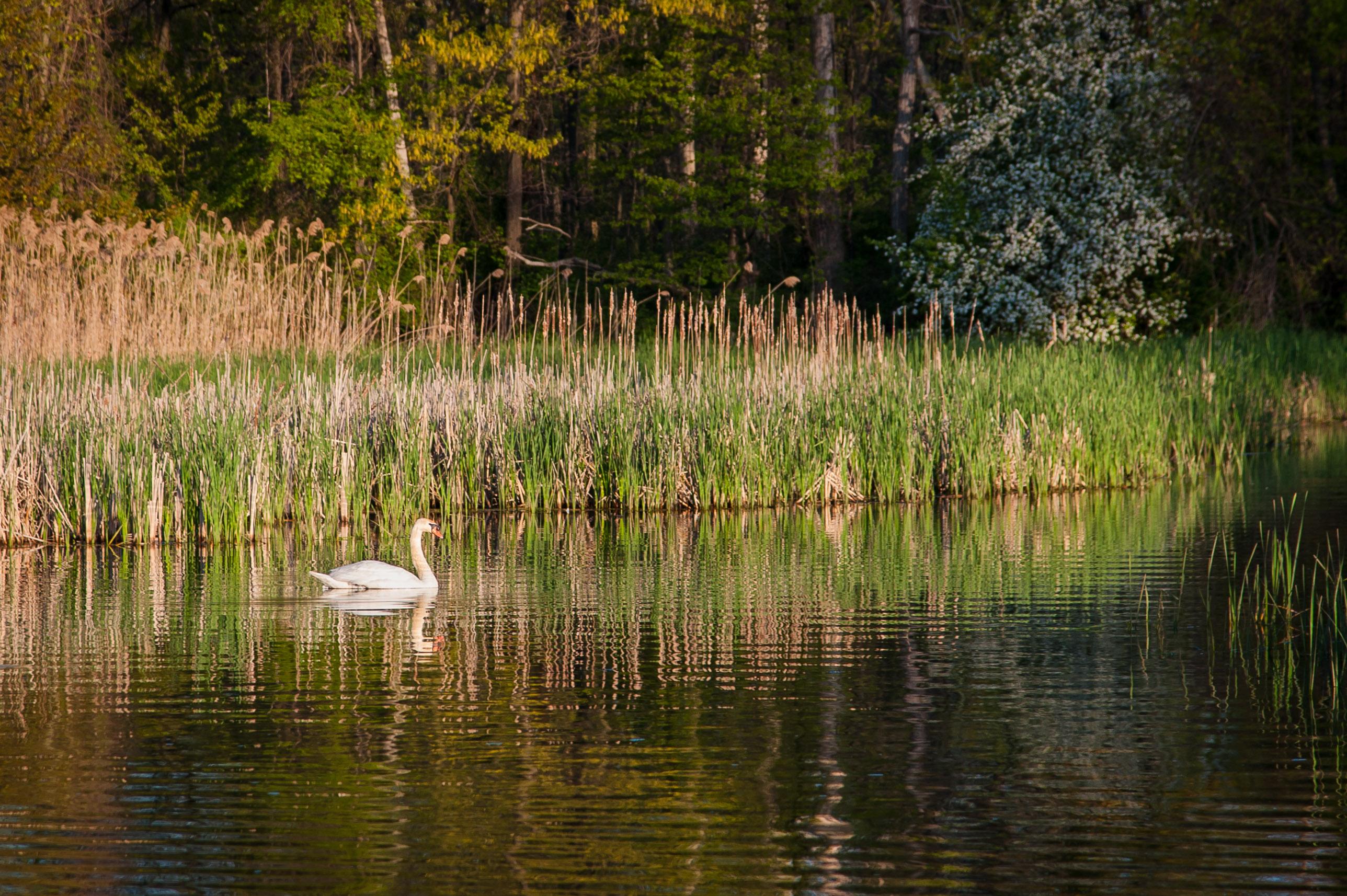 lake ontario fishing charters hamlin ny