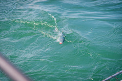 lake ontario salmon fishing charters
