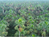 BDFFP Scientists' Research on Palm Trees Holds Key to Assessing Climate Change in Tropical Forests