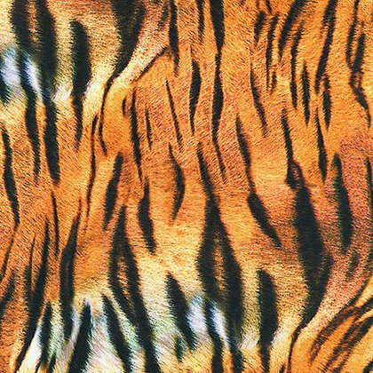 Animal Kingdom by Robert Kaufman- RK19875286