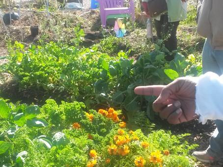 Urban Gardening at Duke Farms with Growing Power