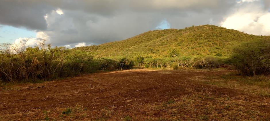 Casa Ani morning, back acreage view.jpg