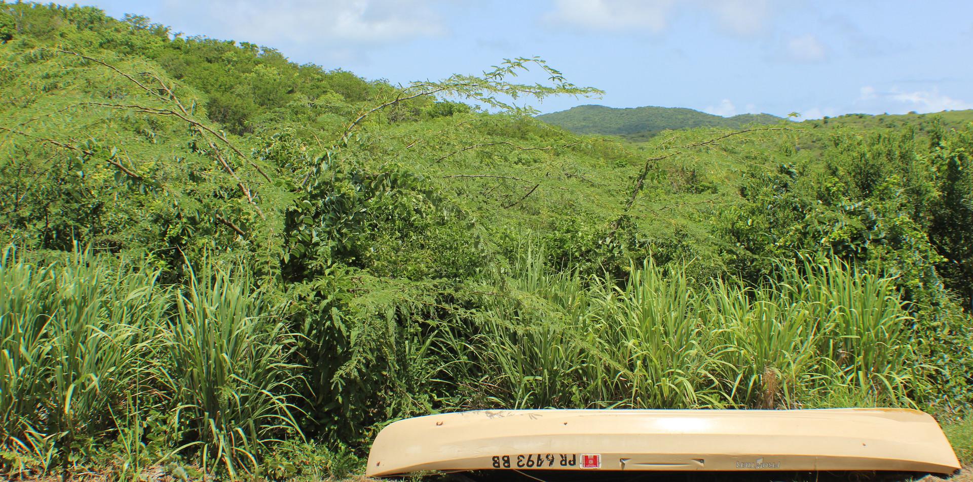View to hillside