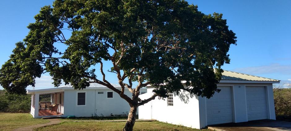 Casa Ani-House, Garage, Tree.jpg
