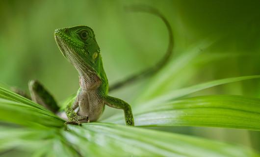 iguana2.jpg