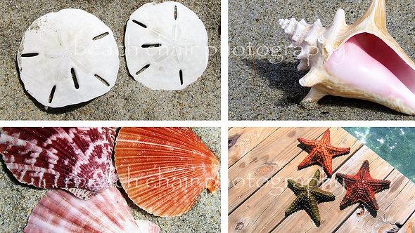 Shells & Stars