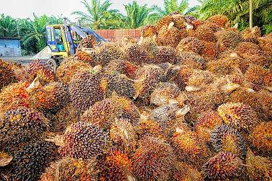 Palm Oil 1.jpg