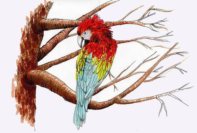 parrotlowres.jpg