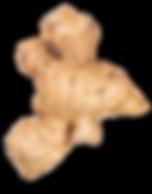 ginger image_1.png