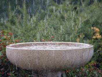Palm Free Rain Bar Soap