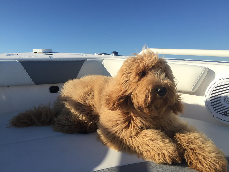 Beau (Blue Boy 2015) Boat.JPG