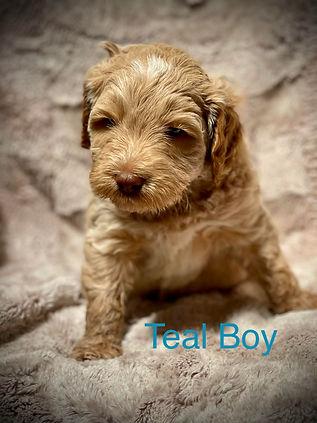 Teal Boy.jpg