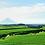 Thumbnail: Kirishima cha _ Niiyam-en