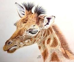 Bonnie Giraffe