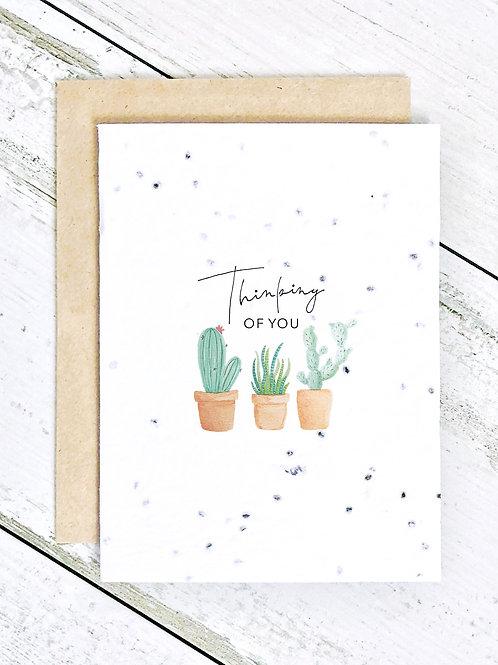 Thinking of You Cacti