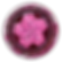 icon_coinSpring19_2x-ipad.png