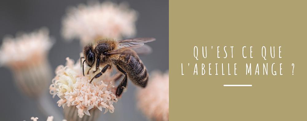 qu'est ce que l'abeille mange